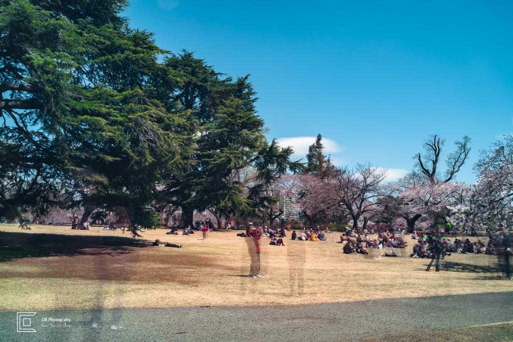 Sakura long exposure photograph taken in Shinjuku Gyoen National Park, Tokyo (around 30 seconds was the exposure if I remember well).
