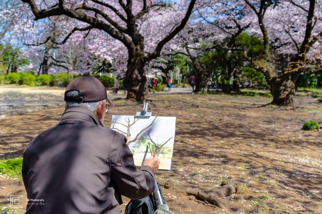 Man painting Cherry Trees during full blossom in Shinjuku Gyoen National Park