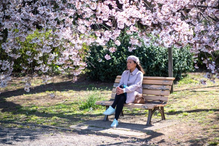 Woman siting on a bench under a beautiful Cherry Tree