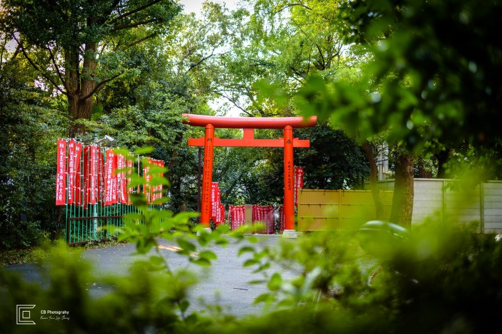 Biggest Torii Gate right after the torii tunnel at Hiw Shrine Tokyo